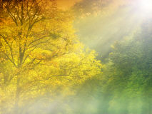 Mist in het bos Royalty-vrije Stock Foto
