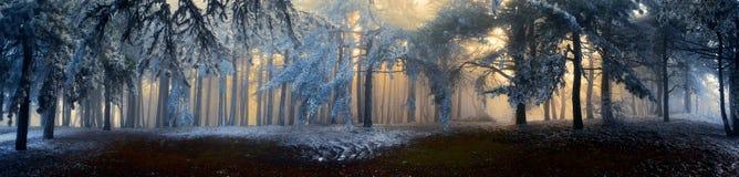 Mist in het bos Stock Afbeelding