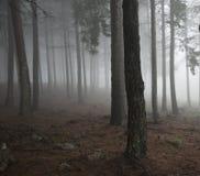Mist in het bos royalty vrije stock afbeelding