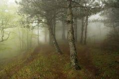 Mist in het bos Royalty-vrije Stock Foto's