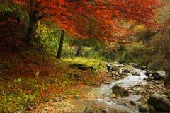 Mist in het bos tijdens de herfst Stock Afbeeldingen