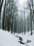 Mist in het de winterbos royalty-vrije stock foto