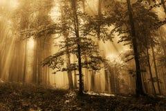 Mist in het gouden bos Stock Afbeeldingen