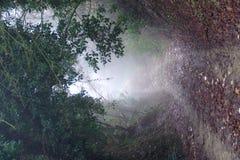 Mist in het hout Stock Foto