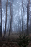 Mist in het meest forrest Royalty-vrije Stock Foto's