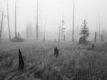 Mist in het moeras Royalty-vrije Stock Fotografie