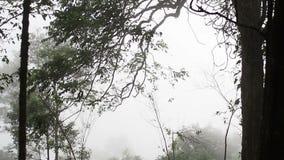 Mist in het mysticusbos stock footage