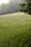 Mist hill meadow. A softly lit meadow of flowers on a mountainside royalty free stock images
