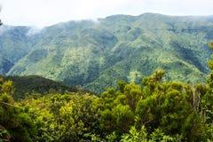 Mist i bergen i norden av ön av madeiran Royaltyfri Foto