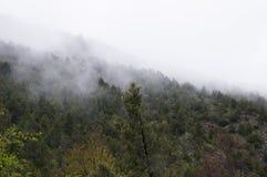 Mist i bergskogen Arkivbilder