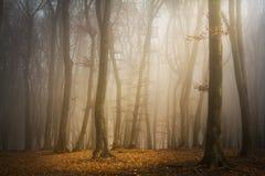 Mist i skogen arkivbilder