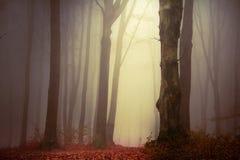 Mist i skogen Arkivfoto
