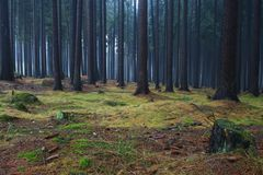 Mist In Forest Stock Images