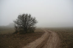 Mist In Rural Area Stock Photo