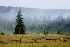 Mist In The Mountain Forest Royalty Free Stock Images