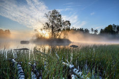 Mist. At the lake early morning Royalty Free Stock Photos