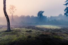 Mist. Landscape in the mist Stock Image