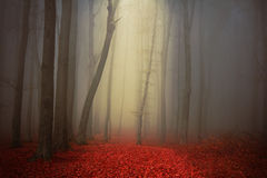 Mist in magic forest Royalty Free Stock Photography