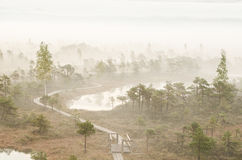 Mist in moeras Royalty-vrije Stock Foto's