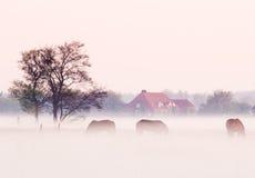 Mist morning Stock Photo