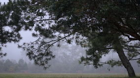 Mist in the morning at Phu Kradueng National Park, Loei province, Thailand stock footage