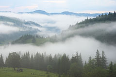 Mist in mountain stock image