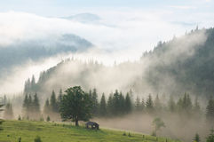 Mist in mountain royalty free stock photography