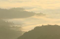 Mist  mountain. In meahongson province, thailand Royalty Free Stock Photo