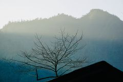 The mist in the mountains is shrouded in winter, and the tree branches are vigorously stretched stock images