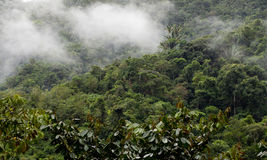 Mist moving through cloud forest. Mist or fog moving through the cloud forest of Ecuador stock photo
