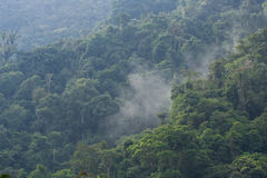 Mist moving through cloud forest. Mist or fog moving through the cloud forest of Ecuador stock image