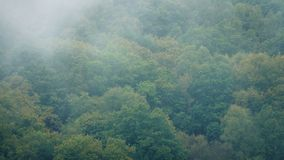 Mist Moving Over The Forest. Heavy mist moves over large forest trees stock footage