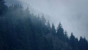Mist Moving Over Trees In The Wild stock footage