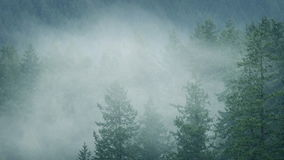 Mist Moving Through Wild Forest In Rainfall. Banks of mist moving through the trees in wilderness forest stock footage