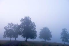Mist in naaldbos na de regen bij dageraad stock foto