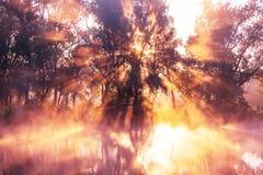 Mist op de rivier Royalty-vrije Stock Fotografie