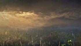 Mist op de weide Stock Foto's