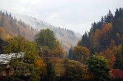Mist op het bos Stock Fotografie
