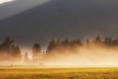 mist op weide Royalty-vrije Stock Afbeelding