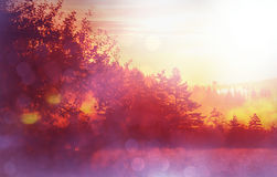 mist op weide Stock Foto