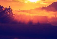 mist op weide Royalty-vrije Stock Foto