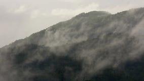 Mist over de hoogste berg van de regenwoudboom stock footage