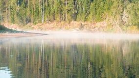 Mist over de rivier Het de herfstbos wordt weerspiegeld in het water op riverbank stock footage