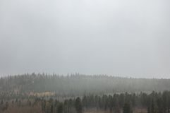 Mist over forest landscape Stock Photography