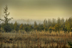 Mist over the forest Stock Photography