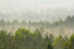Mist over het bos Stock Afbeelding