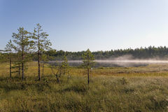 Mist over het bosmeer Stock Afbeeldingen