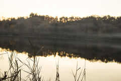 Mist over the lake. reeds and wooden jetty Royalty Free Stock Images
