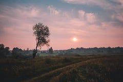 Mist over landweg en eenzame boom zonder bladeren met de zonsondergang op achtergrond stock foto