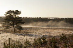 Mist over the Moor. On a sunny day at fall stock images